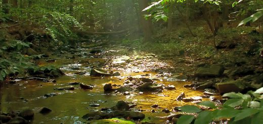 Delaware Creeks with Gold